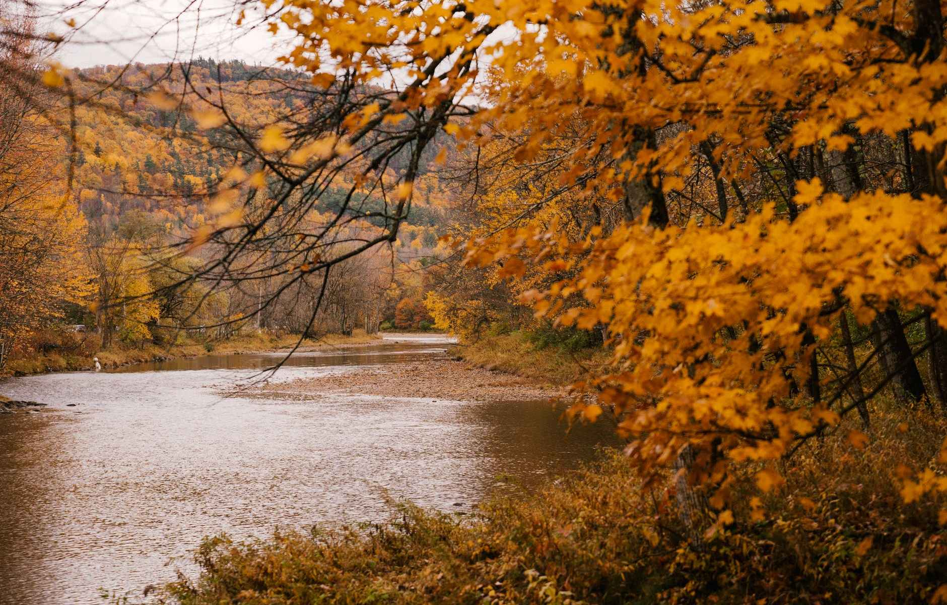 scenic autumn forest with curvy river
