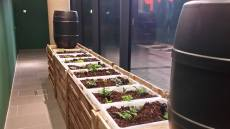 permaculture indoors2