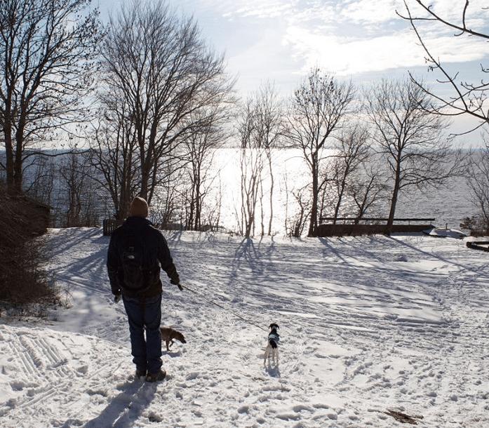 snowydogwalkinombergpark