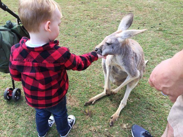 feedingkangaroos