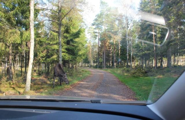 mooseparksweden3