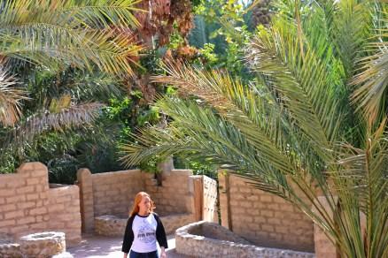 Mana Loa Sierra Raglan Tee Al Ain Oasis