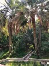 Al Ain Oasis, UAE