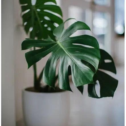 indoor humidity, increase humidity