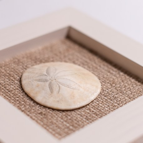 Sand-Dollar-Wall-Art—1