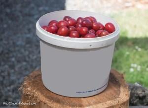 1 gallon of fruit