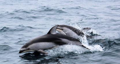 MikeLastinger_Dolphins2