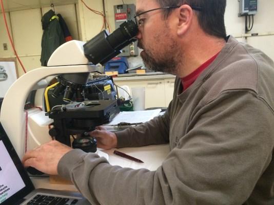 Brian Bill examines a water sample, looking for the toxic phyoplankton Pseudo-nitzchia. Photo Credit: Spencer Showalter