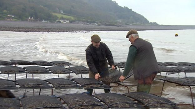 Porlock Bay Oyster - oyster tables by West Country Blacksmiths