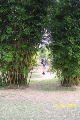 Weavers Bamboo