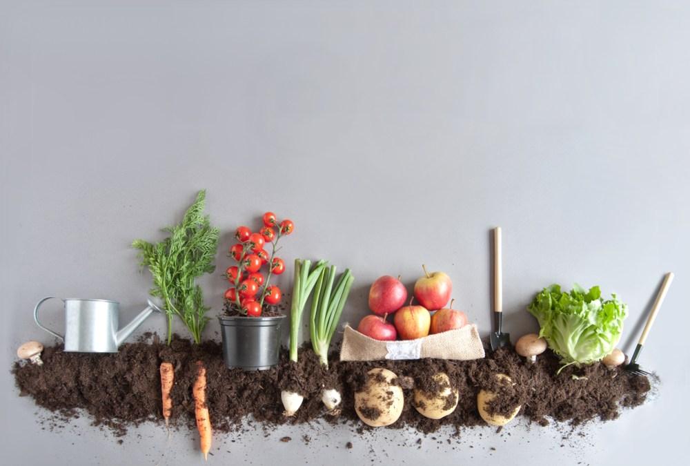 Spring Composting Tips