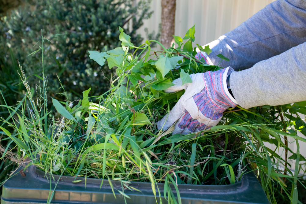 Green Yard Waste Disposal