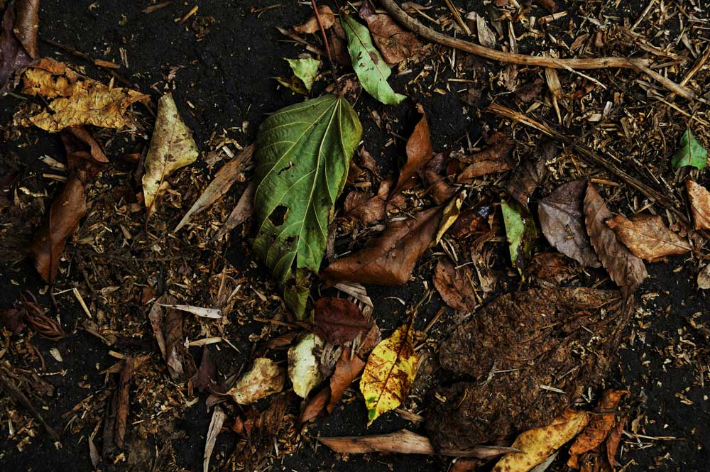 bed of soil and dead leaves. organic decomposition concept.