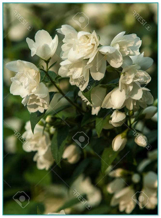Climbing Flowering Plants Canada