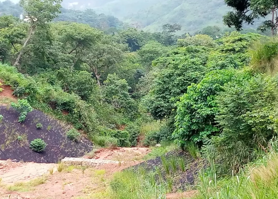 Gully leading to Coal camp