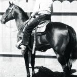 The Top 5 Ranch Horse Bloodlines Western Horseman