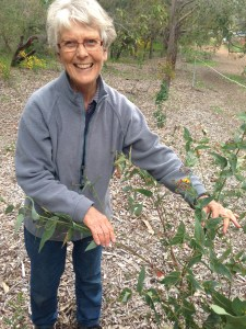 Joy McGilvray, with the native Bookleaf plant. Credit Rachel Neumann