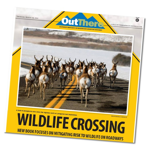 Thumbnail image of Bozeman Daily Chronicle article covering the Safe Passage Wildlife Crossing book published by MSU-WTI