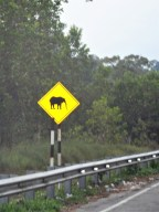Elephant crossing sign next to highway in Malaysia