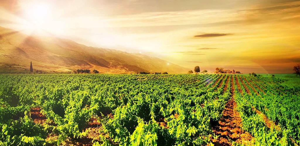 Mudgee Valley Vineyard