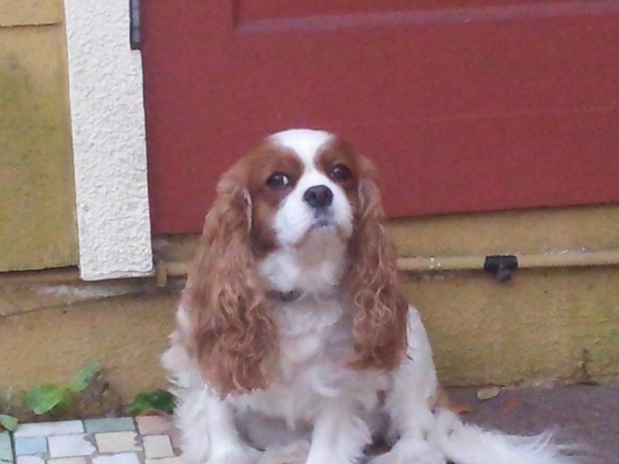 Oldsmar Dog Walker