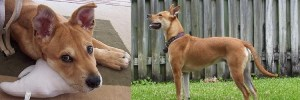 Dante WestFetch Pet Dog Sitter