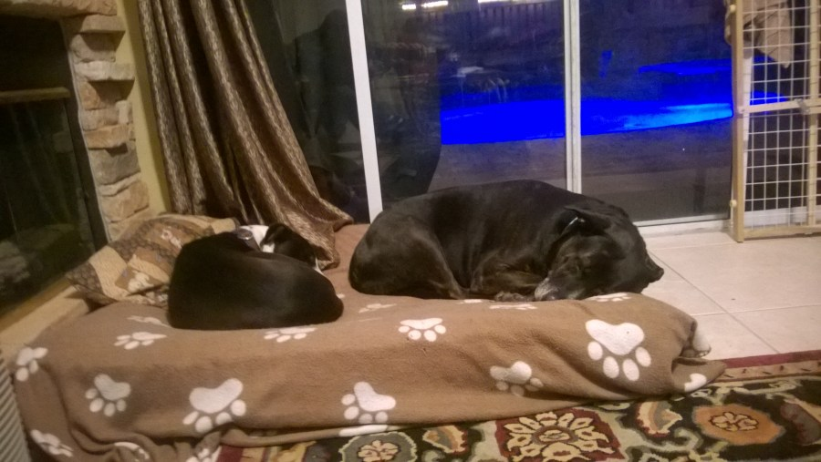 Dog Bed Share Boarding
