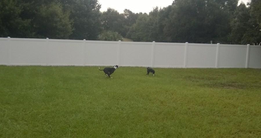 Grass Doggie Day Care