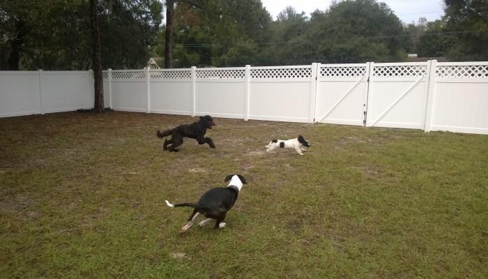 dog park private