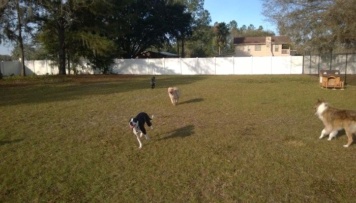 kennel tampa