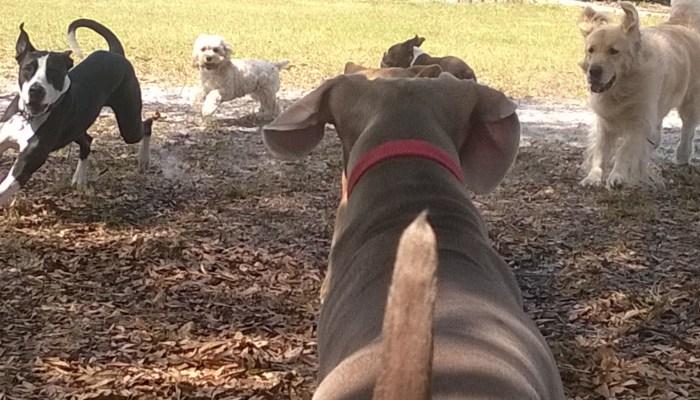 tampa doggie daycare