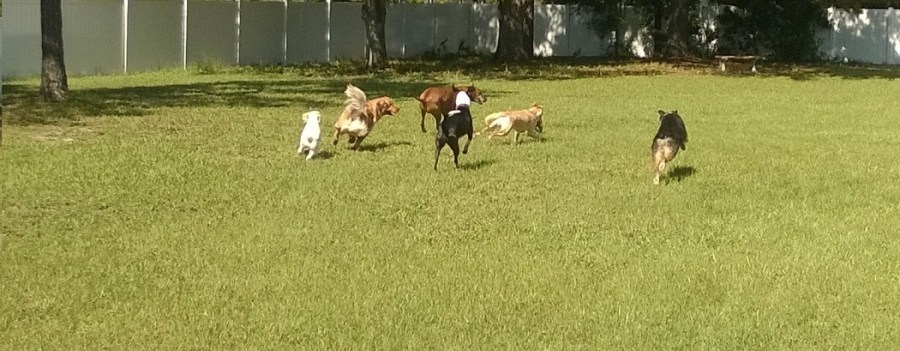 Tampa Doggie Day Care
