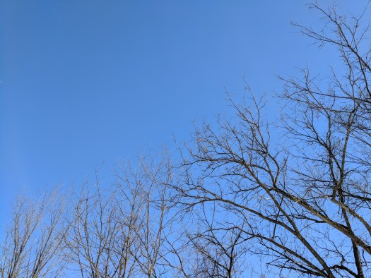 Blue sky in the tree tops