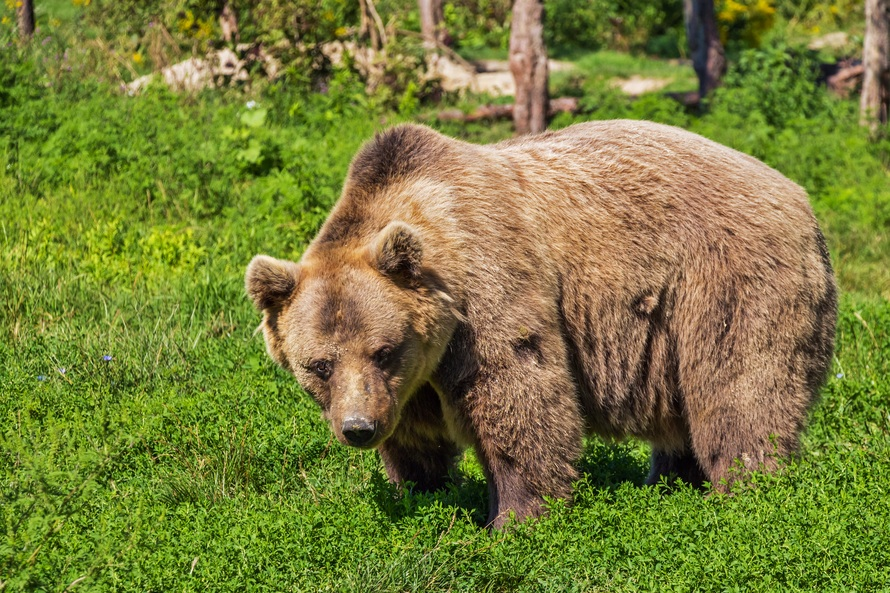 Bear Safety for Hikers