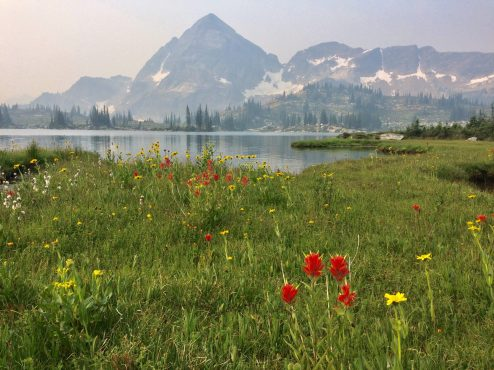 Wild flowers along the lake