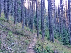 Trail winding through the forest