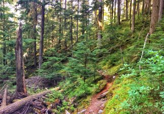 Trail ascending through mossy forest