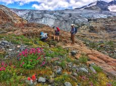 Examining rocks and wildflowers