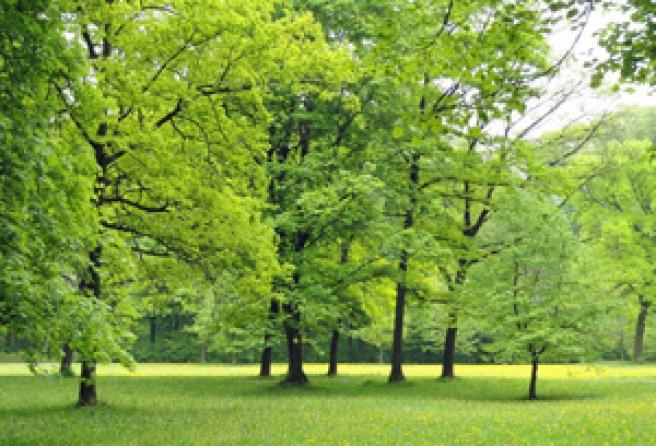 Ein schöner, neuer Park...
