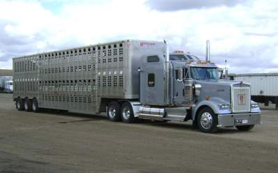 livestockgallery