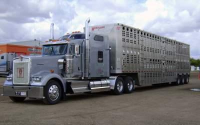livestockgallery7