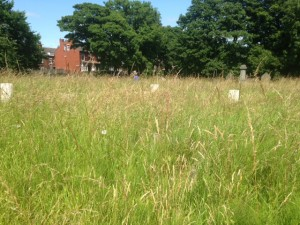 bramley war graves 4