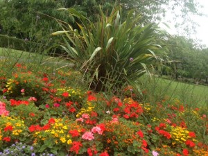 pudsey park flowers 2