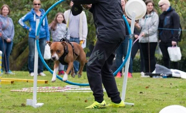 Armley dog show jump