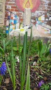 kirkstall in bloom spring 1