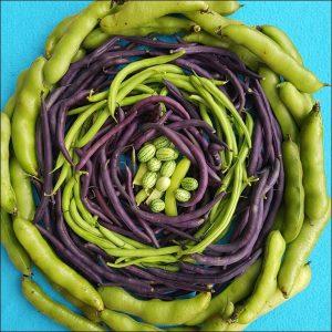 allotment beans