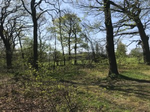 woodhall woodlands pudsey