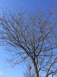 Winter - Tree 01