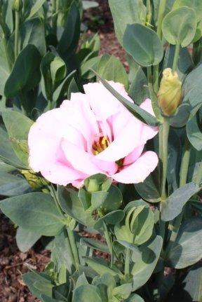 Annual/Perennial