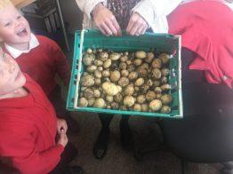 Potatoes3